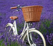 Pashley - Wicker Basket